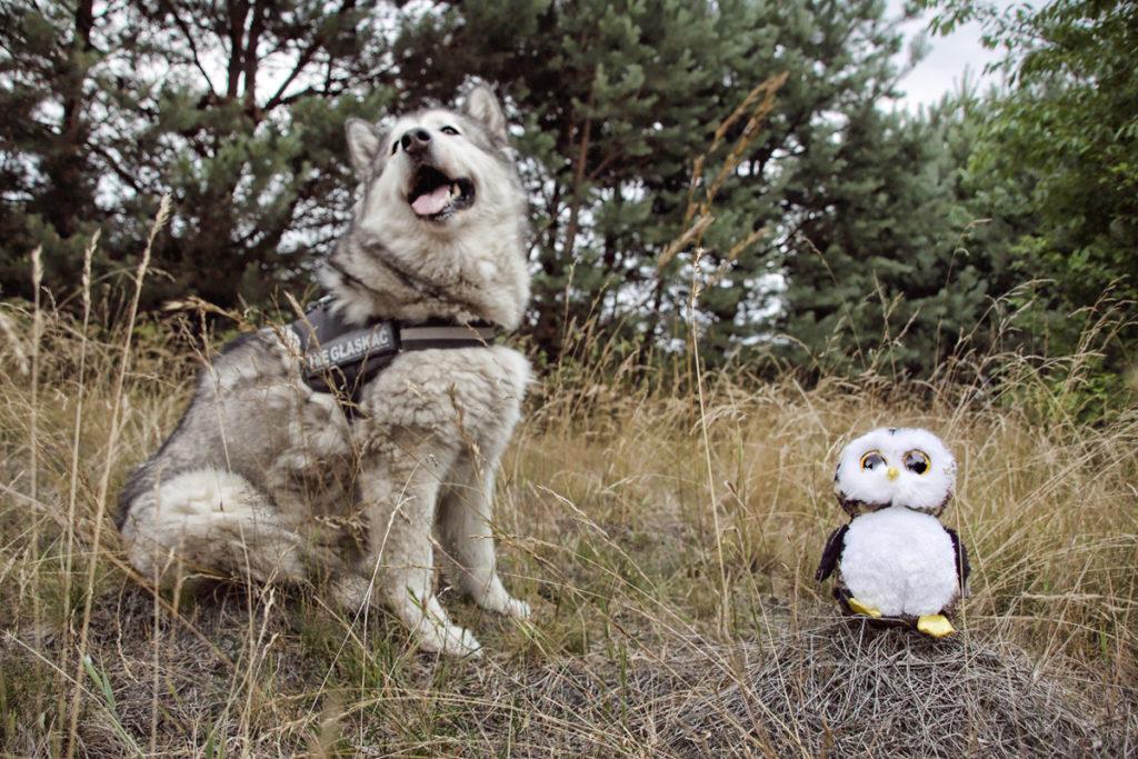 Pies i dziecko