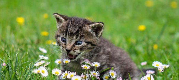 Co może uczulać dziecko wiosną