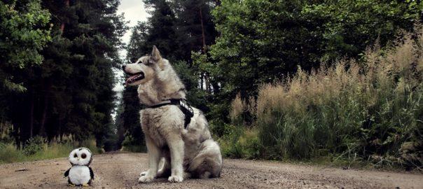 bezpieczny spacer
