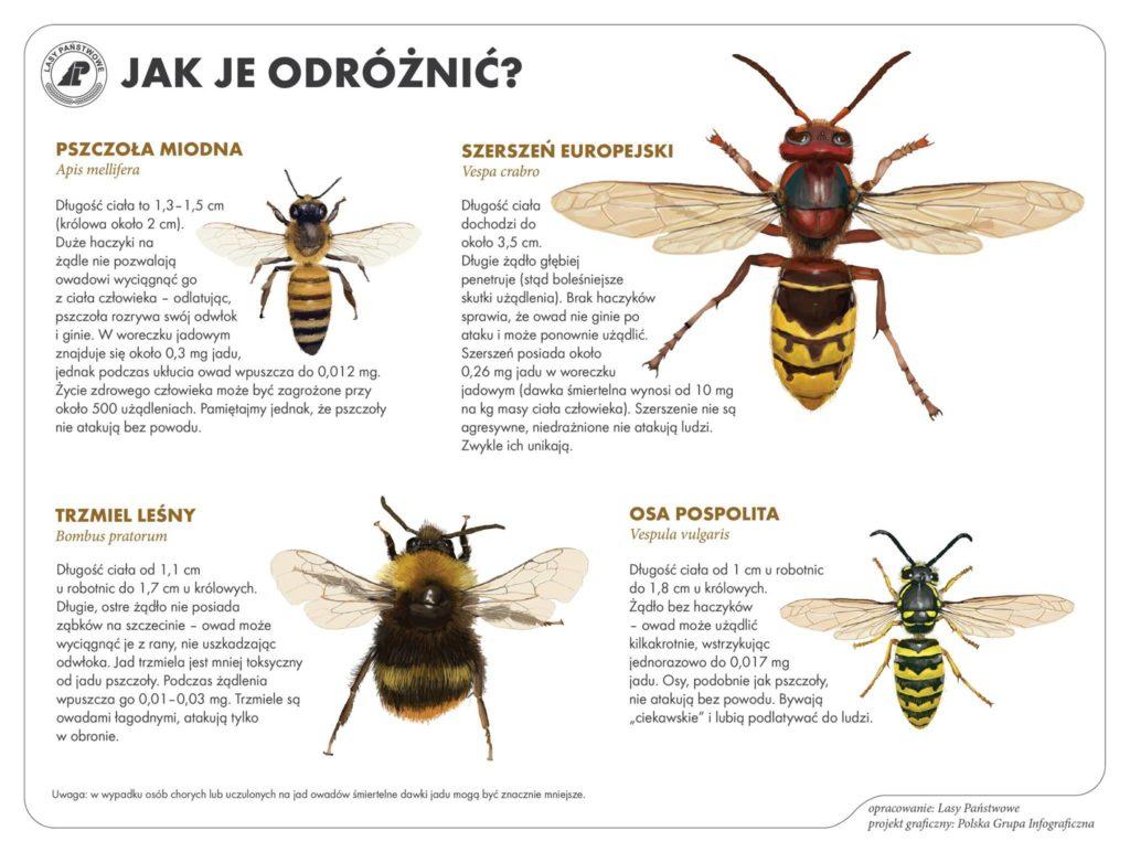 różnice pomiędzy pszczołą a osą